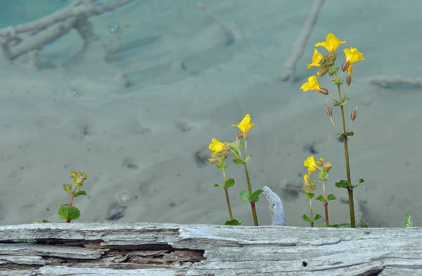 Photograph - Hot Spring Flowers by Bruce Gourley