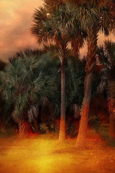 Photograph - Hot Tropics by Evie Carrier