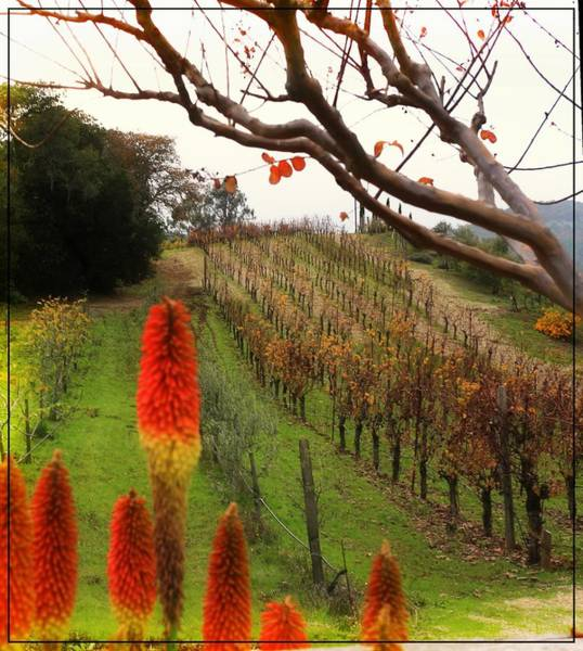 Photograph - Hot Vines In Autumn by Michael Hope