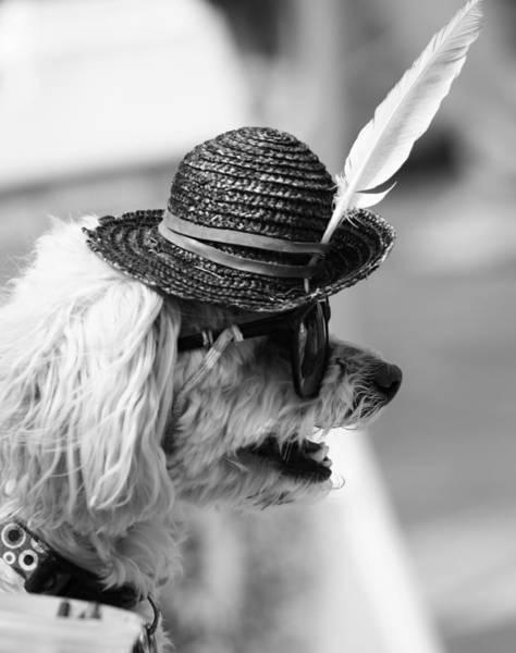 Pride Festival Photograph - Hotdog by The Artist Project