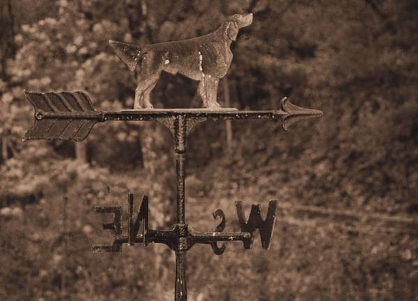 Weather Vane Photograph - Hound Dog Weather Vane by Dan Sproul