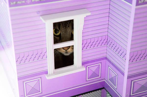 Furon Photograph - Dollhouse Cat by Daniel Furon