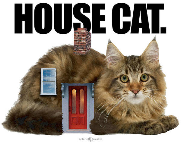 Digital Art - House Cat by Tim Nyberg