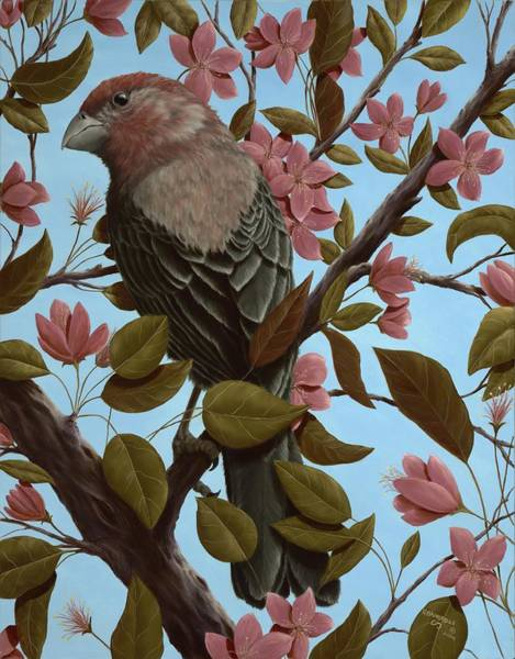 House Finch Wall Art - Painting - House Finch by Rick Bainbridge