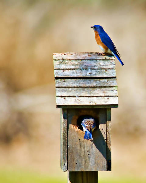 Wildbird Photograph - House Hunting by Lana Trussell