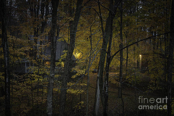 Cabin In The Woods Wall Art - Photograph - House In The Woods by Michele Steffey
