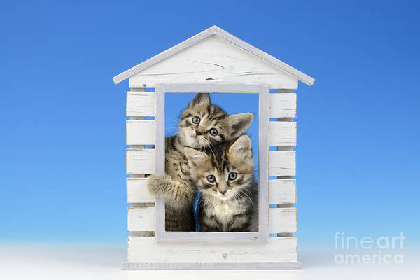 Shed Digital Art - House Of Kittens Ck528 by MGL Meiklejohn Graphics Licensing
