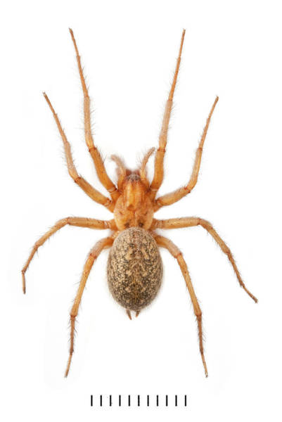 Wall Art - Photograph - House Spider by Natural History Museum, London