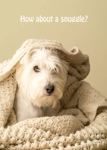 Dog Lover Photograph - How About A Snuggle Card by Edward Fielding