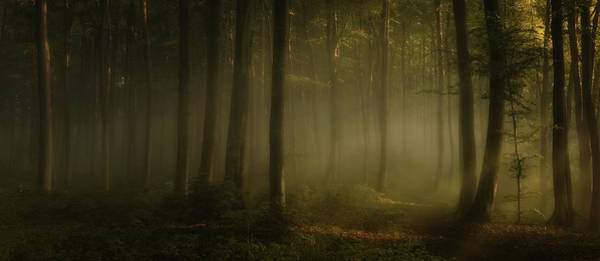 Fog Photograph - How Can Words Express The Feel Of Sunlight In The Morning by Norbert Maier