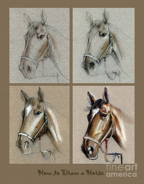 Drawing - How To Draw A Horse Portrait by Daliana Pacuraru