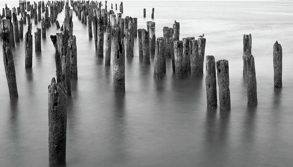 Piling Photograph - Hudson River Pilings by Bill Carson Photography