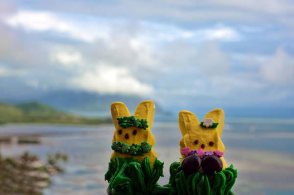 Photograph - Hula Peeps At Kaneohe Bay by Dan McManus