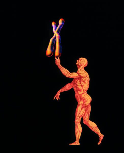 Wall Art - Photograph - Human And Chromosome by Alfred Pasieka/science Photo Library