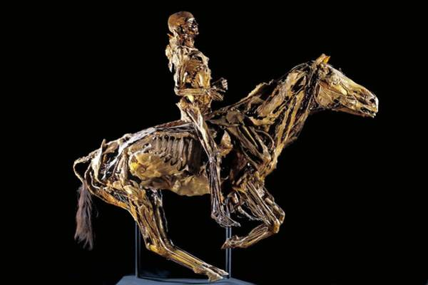 Maison Photograph - Human And Horse Anatomy by Patrick Landmann/science Photo Library