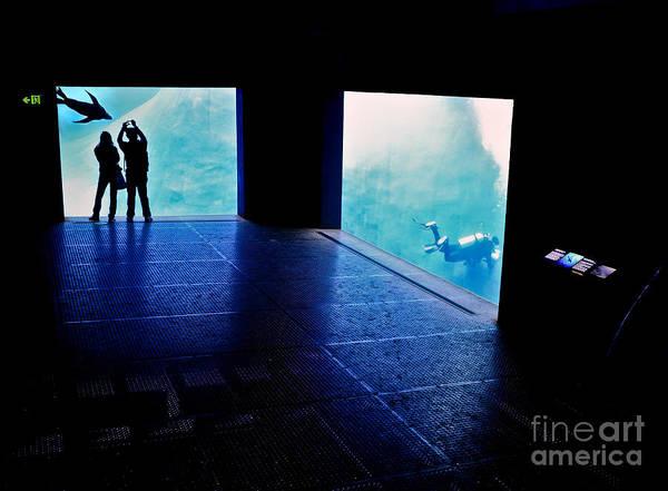Photograph - Human Aquarium by Ray Warren