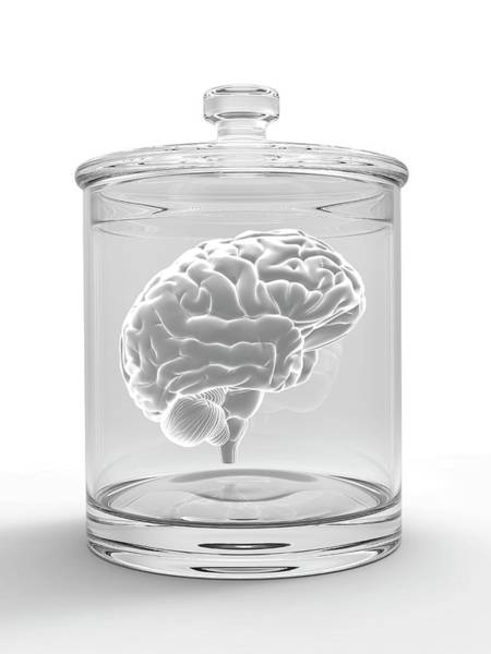 Neurobiology Photograph - Human Brain In A Glass Jar by Alfred Pasieka/science Photo Library