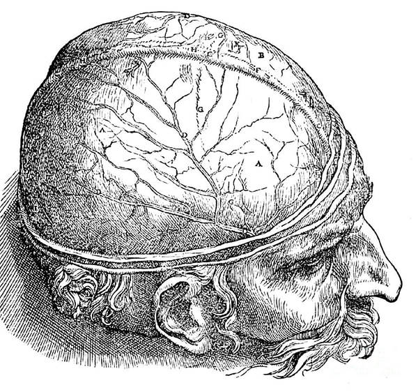 Photograph - Human Brain Vesalius 16th Century by Science Source