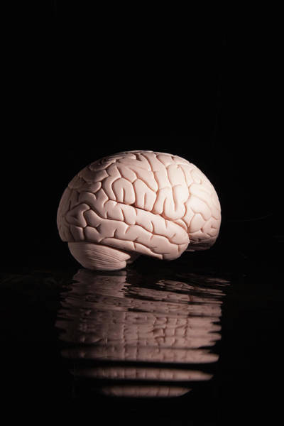 Learning Photograph - Human Brain With Reflection by Pm Images
