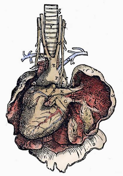 De Humani Corporis Fabrica Photograph - Human Heart, 1543 by Granger