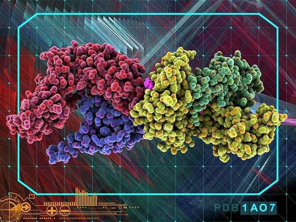Wall Art - Photograph - Human Immune Response Molecule Complex by Laguna Design/science Photo Library