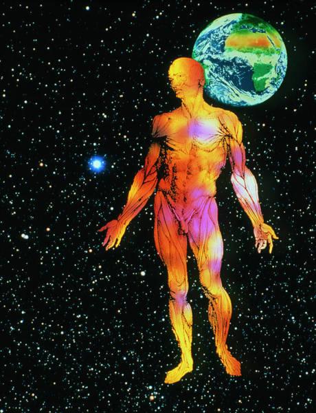 De Humani Corporis Fabrica Photograph - Human Muscle System by Mehau Kulyk/science Photo Library