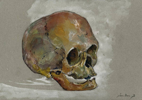 Skulls Wall Art - Painting - Human Skull Study by Juan  Bosco