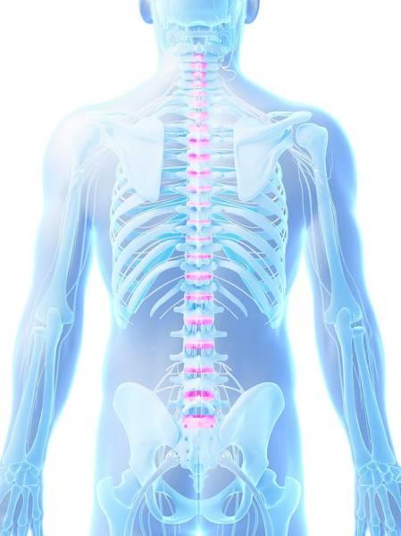 Lumbar Vertebra Photograph - Human Spinal Discs by Sebastian Kaulitzki