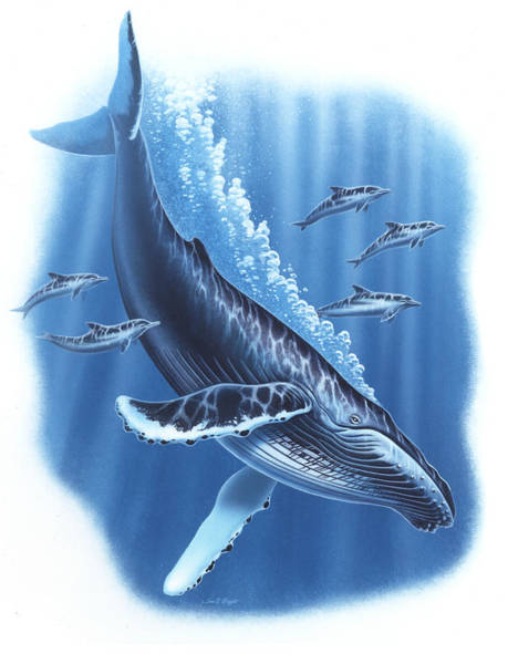 Saltwater Wall Art - Painting - Humback And Dolphins by JQ Licensing