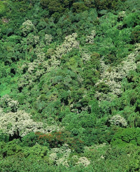 Humid Photograph - Humid Tropical Forest Canopy by Simon Fraser/science Photo Library