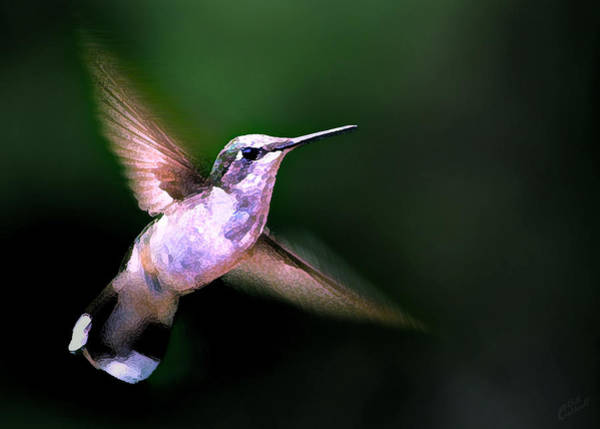 Photograph - Hummer Ballet 1 by ABeautifulSky Photography by Bill Caldwell