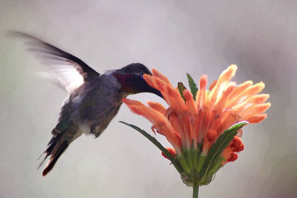 Digital Art - Hummer by Photographic Art by Russel Ray Photos