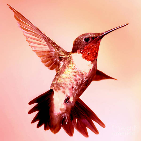 Painting - Humming Bird by Bob and Nadine Johnston