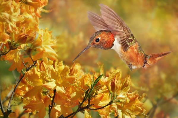 Photograph - Humming In The Azaleas by Leda Robertson