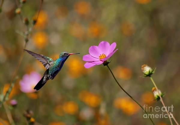Photograph - Humming In The Cosmos by John  Kolenberg