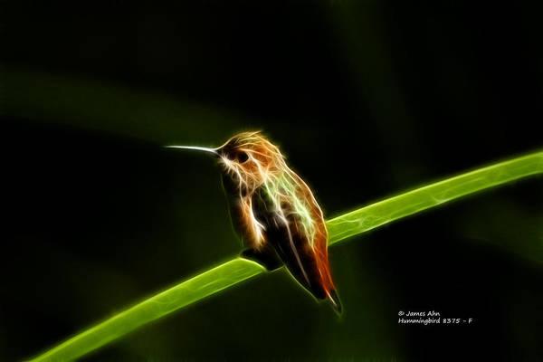 Digital Art - Hummingbird 8375 - F by James Ahn