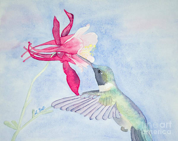 Hummingbird And Columbine Art Print