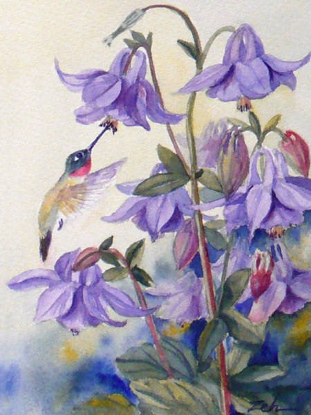 Hummingbird And Purple Columbine Art Print