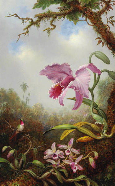 Humming Bird Wall Art - Painting - Hummingbird And Two Types Of Orchids by Martin Johnson Heade