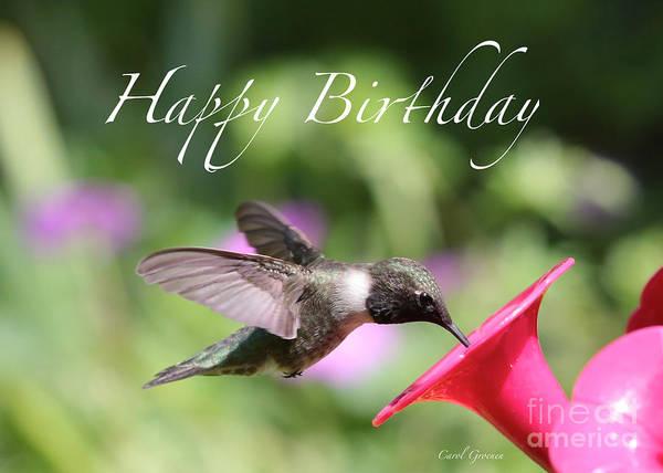 Hummingbird Feeder Photograph - Hummingbird At Feeder Birthday Card by Carol Groenen