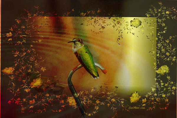 Photograph - Hummingbird At The Pond by Ericamaxine Price