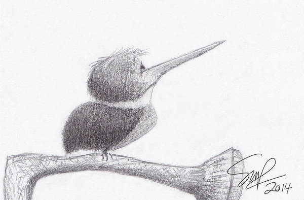Drawing - Hummingbird Bulldog by Steven Powers SMP