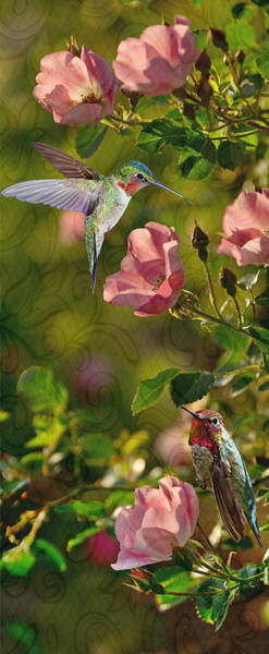 Photograph - Hummingbird Fantasy by Leda Robertson