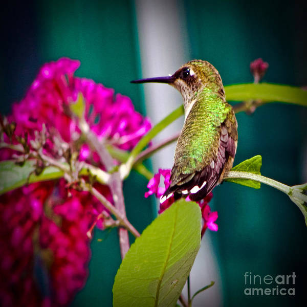 Photograph - Hummingbird Garden by Gary Keesler