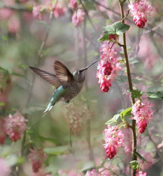 In Flight Photograph - Hummingbird Heaven by Angie Vogel