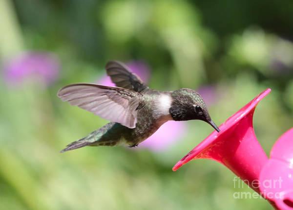 Photograph - Hummingbird In Green by Carol Groenen