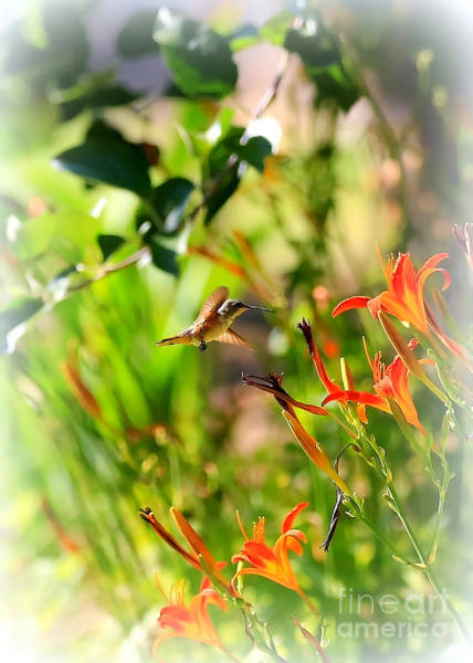 Photograph - Hummingbird In The Daylilies by Carol Groenen