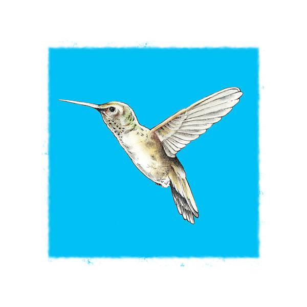 Digital Art - Hummingbird by Keith May