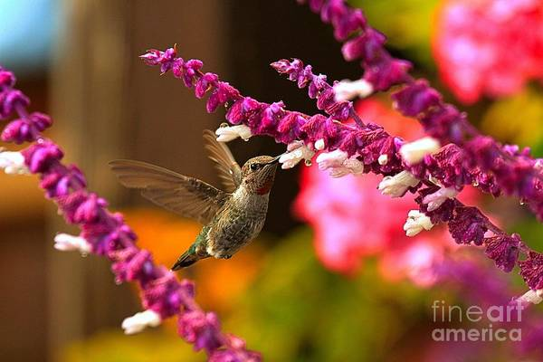 Photograph - Hummingbird Landscape by Adam Jewell