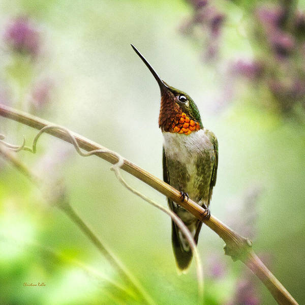 Beautiful Hummingbird Photograph - Hummingbird Looking For Love Square by Christina Rollo